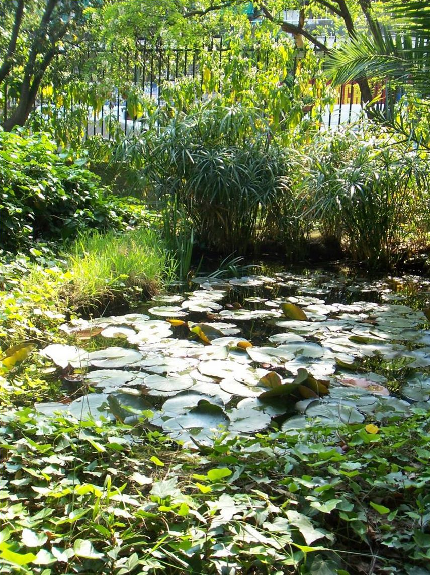A small artificial pond with water lilies (Nymphaea sp.) is surrounded by ivy (Hedera helix) and umbrella-sedges (Cyperus sp.) near the entrance of the Garden