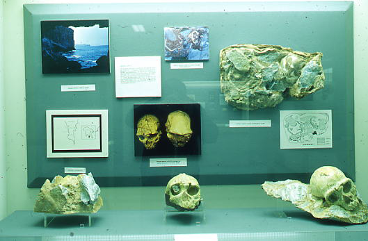 Skulls from Neolithic sites in Greece (Mitilini, Arcadia, Kozani)